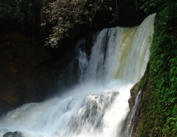 Private Tour of Dunn's River Falls in Ocho Rios