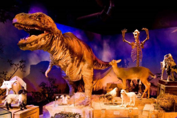 Ripley's Believe it or Not! Including the Mirror Maze and Laser Race - Fast Track Entry