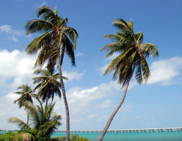 Key West with Dolphin Watch Tour